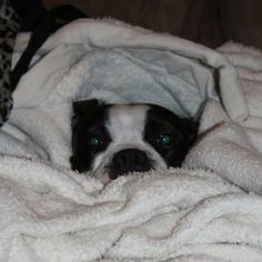revere loves to snuggle in towels warm from the dryer after her bath