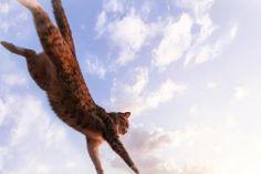 Летающая кошка