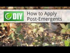 How To Kill Poa Annua (Annual Bluegrass) - Treatment & Control