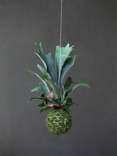 Art floral japonais Kokedama : idées de pots de plante naturels -