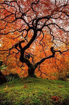 Tree of Life-tree inspiration