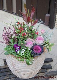 クリックで拡大してご覧ください。 Winter Container Gardening, Succulent Gardening, Container Plants, Winter Planter, Fall Containers, Creative Landscape, Green Flowers, Ikebana, Dream Garden