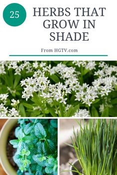 These fragrant and tasty herbs can tolerate a little shade. These fragrant and tasty herbs can tolerate a little shade. Amazing Gardens, Herbs, Garden Help, Plant Crafts, Gardening Blog, Food Garden, Herb Garden Design, Outdoor Plants, Shade Plants