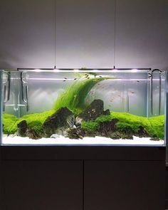 """258 Likes, 3 Comments - Aquascape (@aquascapenl) on Instagram: """"Beautiful scape ------------------------------------------------ #aquascape #aquarium #aqua…"""""""