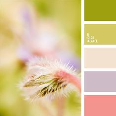 LSp - This palette combines soft shades of spring. Green, beige, light green, pink and violet colors look very harmonious together. Green Colour Palette, Pastel Palette, Color Palate, Beige Color, Colour Schemes, Color Combos, Color Harmony, World Of Color, Color Stories