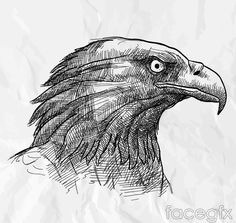 Hand-painted Eagle head vector