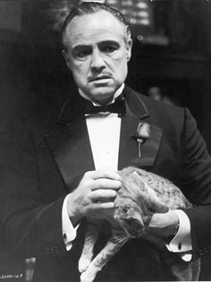 Mr Marlon Brando.....I mean The God Father.....with a kitty #famous #people #cats