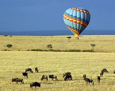 Kenya Tours & Travel - Right Travel offers the best Private Kenya Safari Tour, Kenya Packages and many more. Indulge in the wildlife of Kenya and enjoy your Kenya Tours, Kenya Vacations, Kenya Trips with us.  http://www.righttravel.info/country/kenya-4.html