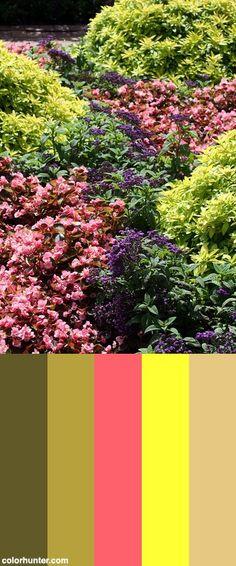 Flowerbed Color Scheme