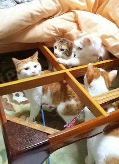 Image result for cat and futon