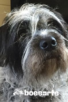 Wirehaired Pointing Griffons are so expressive. I love the way Harry can look at me and just communicate what she wants so well. She is often an inspiration for my art.