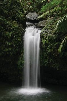 El Yunque  El Yunque is the only tropical rain forest in the U.S. National Forest system.