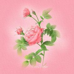 les rose reflection wallpaper - Google Search