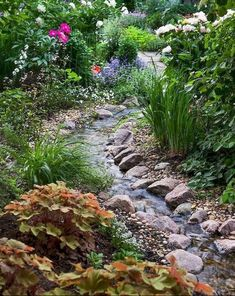 Stream linking Pond garden to Eco pool