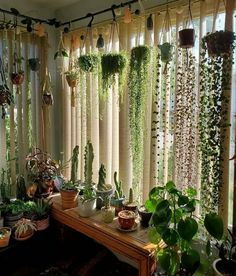 Room With Plants, House Plants Decor, Patio Plants, Plants Indoor, Plant Rooms, Potted Plants, Indoor Plant Decor, Living Room Plants Decor, Bedroom Plants Decor