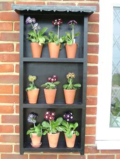 A small theatre, ideal for outside your front door. © Colin Humphrey, National Auricula and Primula Society Kent group. Veg Garden, Lawn And Garden, Garden Plants, Plant Theatre, Primula Auricula, Garden Shelves, Planting Plan, Primroses, English Country Gardens