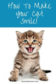 Have you ever seen a cat smile? We've got the purr-fect suggestions to make your cat smile!