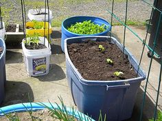 Container Gardening In An Rv - Life in an RV Blog at Allrecipes.com - 175214