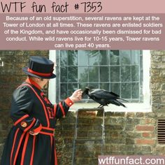 WTF Facts : funny, interesting & weird facts — Ravens at the Tower of London - WTF fun facts Wtf Fun Facts, Funny Facts, Random Facts, Animals And Pets, Funny Animals, Cute Animals, Raven Facts, Crow Facts, Animal Facts
