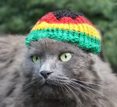 Hand knit Rasta hat, that fits cats and small dawgs. Since the hat is also suitable for dolls, little dogs (like Chihuahua), and for other What's New Pussycat, Cute Cat Face, Puppies And Kitties, Doggies, Cat Hacks, Cat Costumes, Here Kitty Kitty, Cute Hats, Cute Creatures