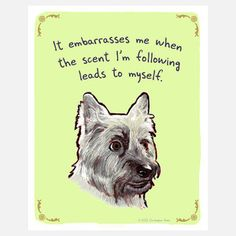"""It embarrasses me when the scent I'm following leads to myself"" Cairn Terrier"