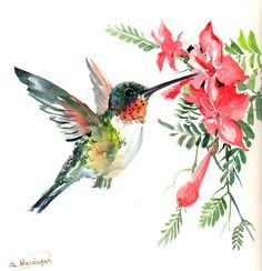 Flying Hummingbird, original watercolor painting, 12 X 12 in, red flowers, blue… Watercolor Hummingbird, Hummingbird Art, Watercolor Animals, Watercolor And Ink, Watercolor Paintings, Watercolor Trees, Watercolor Portraits, Watercolor Landscape, Humming Bird Watercolor