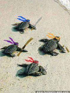 Teenage Mutant Ninja Turtles.......no no no.....preteen mutant ninja turtles!