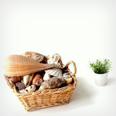 wicker basket with sea shells- eco friendly - Beach home interior- garden decor- outdoor life- nature gift for her- woman vintage - Sweetlakevintage Gifts For Nature Lovers, Interior Garden, Outdoor Life, Vintage Love, Wicker Baskets, Home And Living, Sea Shells, Gifts For Her, Eco Friendly