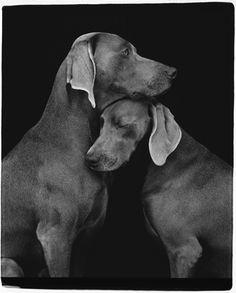 Friends, by artist William Wegman    #photography