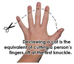 The United States and Canada are way behind the rest of the civilized world in our attitude toward declawing of cats. Declawing has been illegal in England for several years.  Australia, New Zealand, Germany, Wales, Finland and Brazil are some of the countries that either consider declawing illegal or inhumane