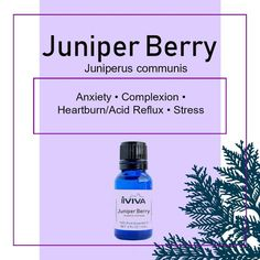 Juniper Juniper Oil Juniper Berry Juniper Berry Oil | Etsy Juniper Berry Oil, Juniper Berry Essential Oil, My Essential Oils, Therapeutic Grade Essential Oils, Acne Serum, Acne Oil, Carrier Oils, Oils For Skin, Acne Treatment