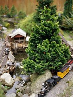 Add year-round interest to your yard with conifers. Learn about the best conifers for your yard such as the Silver Korean Fir, Weeping White Pine, Dwarf Blue Spruce, Japanese Umbrella Pine, and more. Hinoki Cypress, Train Miniature, Garden Railroad, Backyard Garden Design, Backyard Ideas, Garden Ideas, Rustic Backyard, Large Backyard, Yard Design