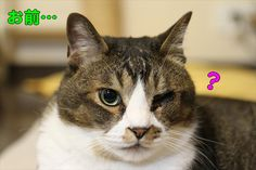 なぜ、はやまった? - http://iyaiyahajimeru.jp/cat/archives/65831
