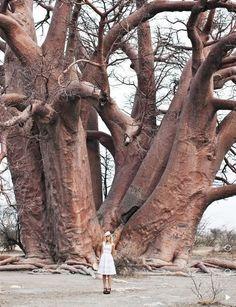 Amazing Tree!