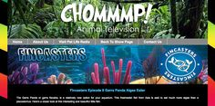 My aquarium videos, called Fincasts, can be viewed on chommmp.com the video side of the popular Pet Life Radio