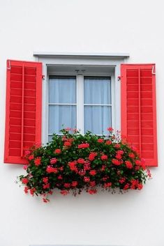 """Match the Flowers 