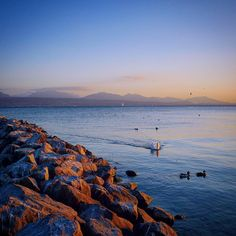 How Lausanne does dusk... . #lake #suisse #shareyoursunset #lumix #vision