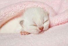 kittens sleeping Hijab 7 rules of hijab Newborn Kittens, Baby Kittens, Cats And Kittens, Cute Little Kittens, Cute Cats, Adorable Kittens, Crazy Cat Lady, Crazy Cats, Sandro