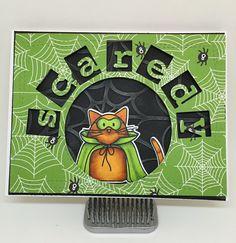 https://flic.kr/p/yAEv51 | Scaredy Cat