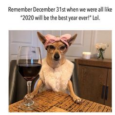 Sick and Tired Of The Panic? Here Are Some Hilarious Corona Virus Memes To Try And Brighten Your Day! – Part 4 - Ronin's Grips Funny Dog Memes, Funny Dog Videos, Funny Animal Memes, Funny Animal Pictures, Funny Dogs, All The Things Meme, Good Things, Funny Things, Even When It Hurts