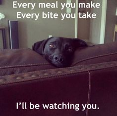Every meal you make, every bite you take, I'll be watching you. Via: www.dogshaming.com