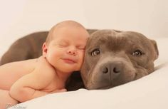 Photos from Underdogs Pitbull Rescue's post - Underdogs Pitbull Rescue...those two are ADORABLE!