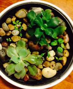 Succulent planter with rocks for centerpiece
