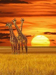 #SUN##SKY##NATURE# #AMAZING##ANIMALS#