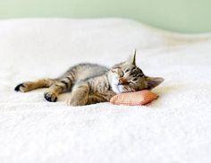 見てみて♪この子専用のキュートな枕?