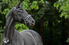 Fotografie Pferde | Fotografie & Kunst Petra Tänzer