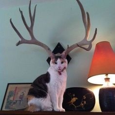 Deer cat Follow us on: - http://crwd.fr/2lPeySN - Twitter: http://crwd.fr/2lPckml - Pinterest:http://crwd.fr/2mqMgkD - Facebook:http://crwd.fr/2mqrC4b  #catstagram #instacat #takemecamping #dogsofinstgram #dachshundpuppy #dachshundoftheday #dachshundsofig #dachshundsonly #dachshundworld #puppyoftheday #puppies #labstagram #labs_of_insta #dogsofficialdog #corgisofinstagram #cockerspaniel #mydog #russianminiatures #pets #petsagram #dogsofinsta #dogselfie #puppy #terrier #Dogsofinsta…
