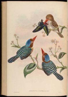 v 1 - Birds of Asia / by John Gould. - Biodiversity Heritage Library
