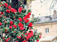 flowers in paris via mint love social club: {travel snapshots}