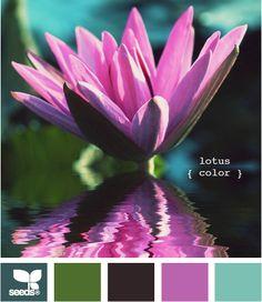 Lotus color palette